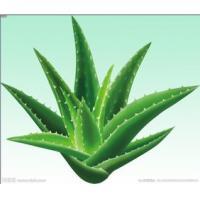 Aloes extract, Aloin, ALOE VERA EXTRACT, ALOE VERA POWDER, ALOE JUICE POWDER, ALOE VERA GEL FREEZE-DRIED POWDER  Made in Korea