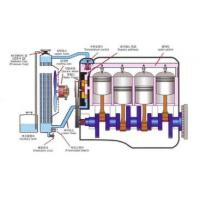 Eneryplus-Bio Power long  Made in Korea