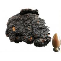 Chaga extract, Inonotus obliquus extract, Chaga Mushroom extract, Chaga Polysaccharides  Made in Korea