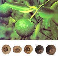 Citrus Aurantium Extract, Synephrine, Citrus Sinensis Extract  Made in Korea