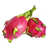 Dragon fruit extract, Pitaya Extract, Pitaya fruit powder  Made in Korea