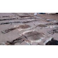 Dry and Wet Salted Donkey and Cattle Hides  Made in Korea