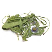 Erigeron beviscapus Extract  Made in Korea