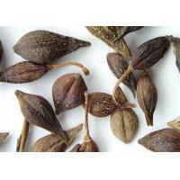 Forsythia Suspensa Extract, Forsythia Extract  Made in Korea