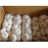 Fresh Garlic, Fresh Ginger,Garlic Granules Ginger Granules, Garlic Powder, and Ginger Powder  Made in Korea