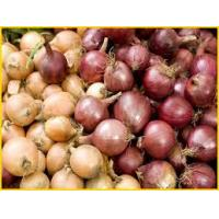 Fresh Red, Yellow, White Onions  Made in Korea
