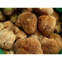 Lions mane mushroom extract, Hericium Extract, Hericium Erinaceus Extract, Hericium erinaceus polysaccharides  Made in Korea