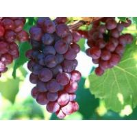 Red grape skin extract, Grape skin extract, Red grape peel extract, Red grape husk extract, Red vine skin extract  Made in Korea