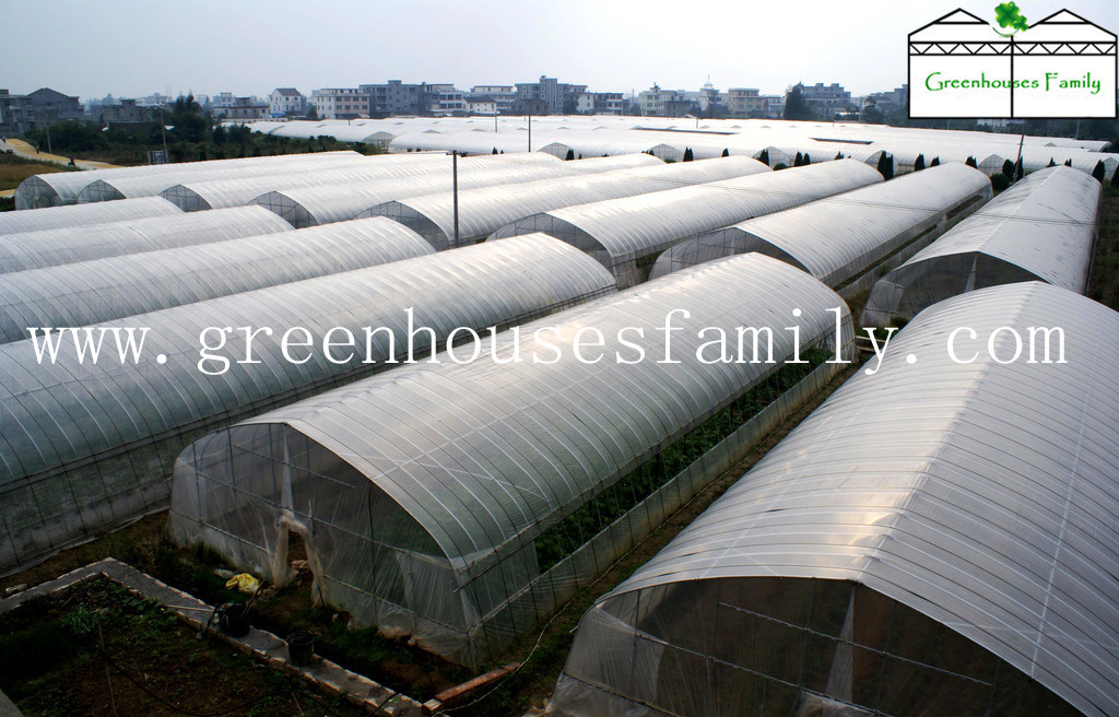 Plastic Tunnel Greenhouses for Agriculture