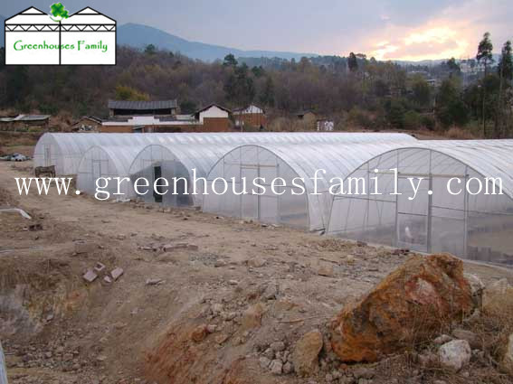 Tunnel Greenhouse  Made in Korea