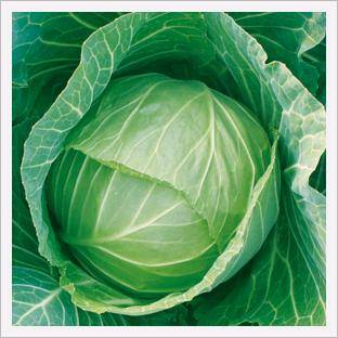 Cabbage, King of Field