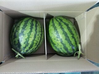 [Fruit-Vegetables] Water Melon for Export
