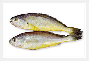Chuja Yellow Corvina