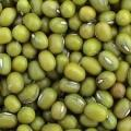 Green Mung Bean  Made in Korea