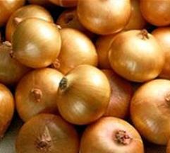 Onion  Made in Korea