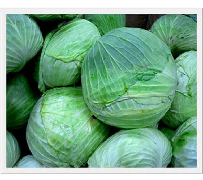 Fresh Cabbage  Made in Korea